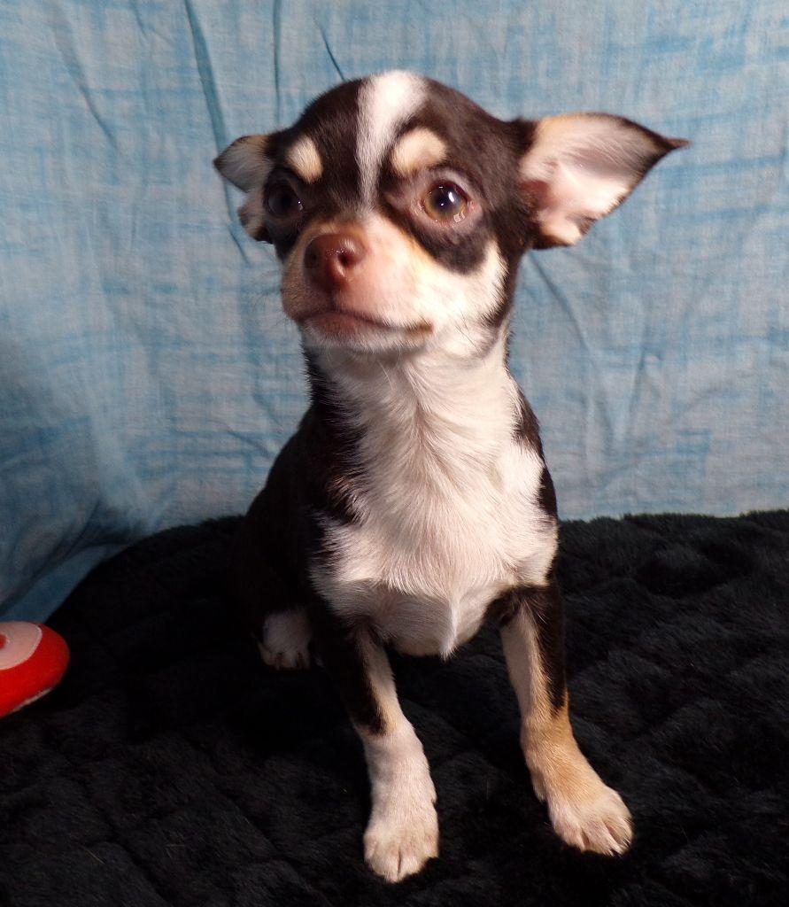 NESQUICK 800 - Chihuahua