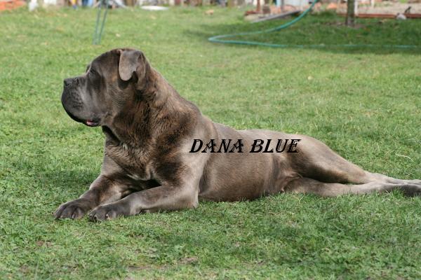 Dana blue (Sans Affixe)