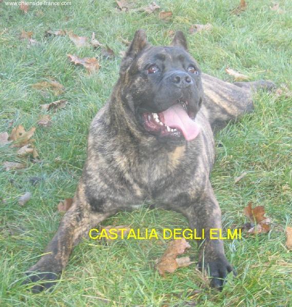 CH. Castalia degli elmi (Sans Affixe)