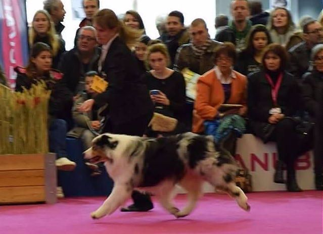 Accueil elevage des minis toon 39 s eleveur de chiens for Salon du chiot lyon