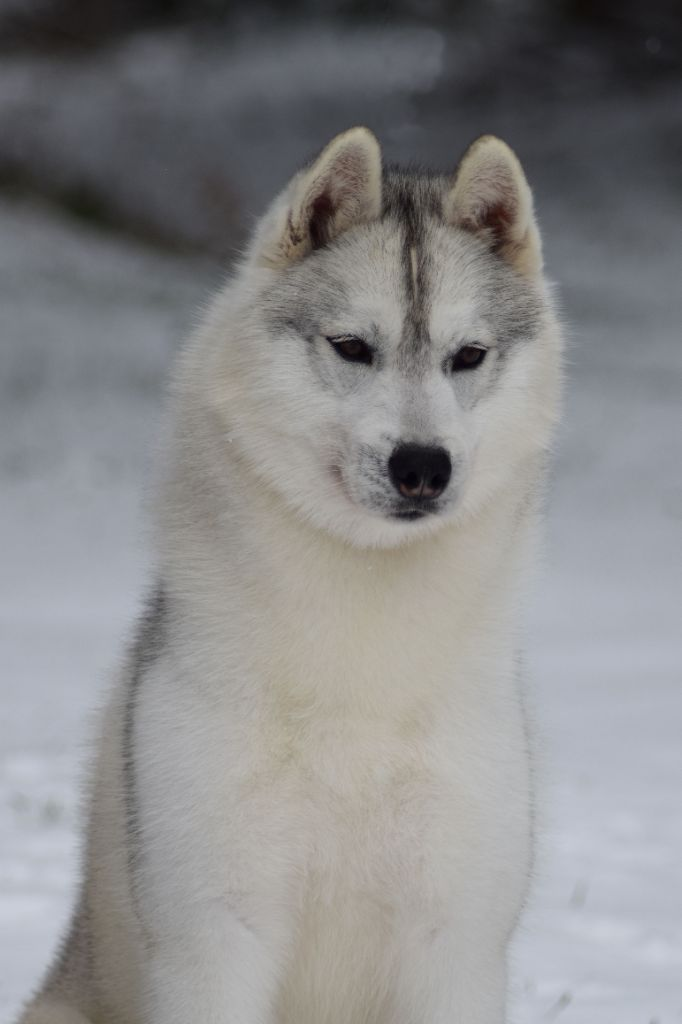 Unchain my heart sniego sunys
