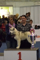 CH. Multi bis.full monty of siberian lady