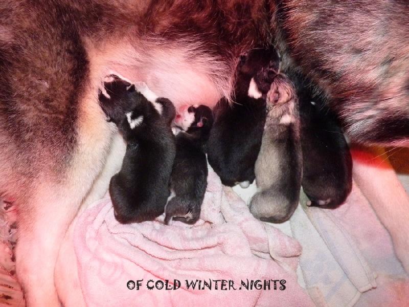 Glory to dreamcatcher dite galinka Of cold winter nights