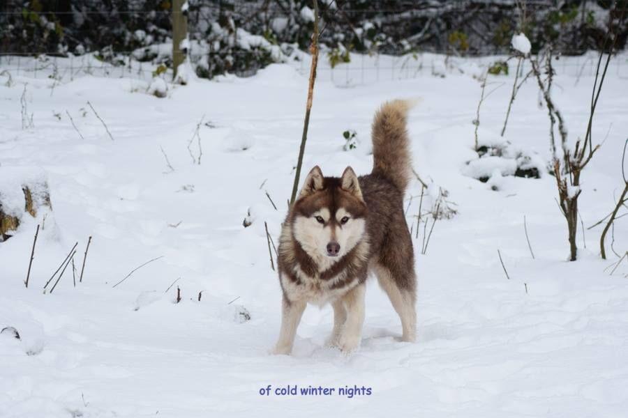 High illusion dite haïka Of cold winter nights