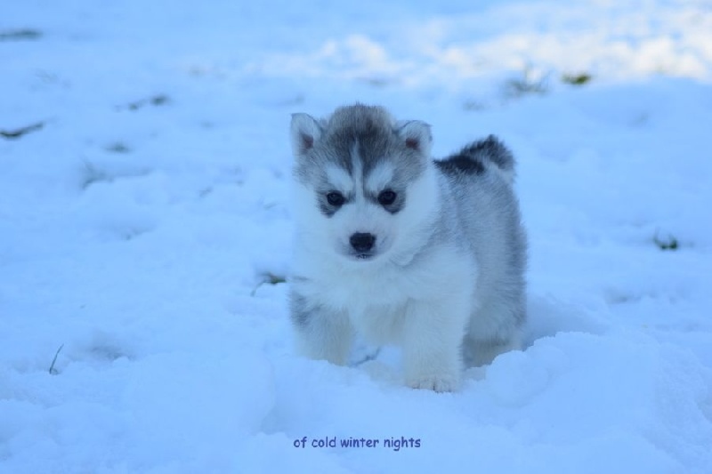 snow and cold winter nights Winter's howl chapter 15: cold winter nights ~~~~~ rainbow walked alongside snowstorm, her head resting on his shoulder.