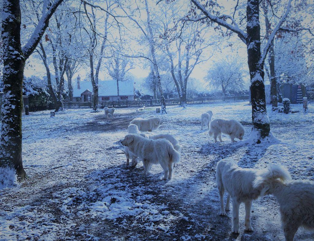 des Arcanes D'Hermes - La neige en Sologne