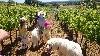 - Nos petits dans les vignobles d'Allegria