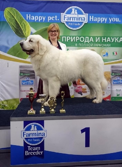des Arcanes D'Hermes - Marquis jeune Champion Russe à 9 mois