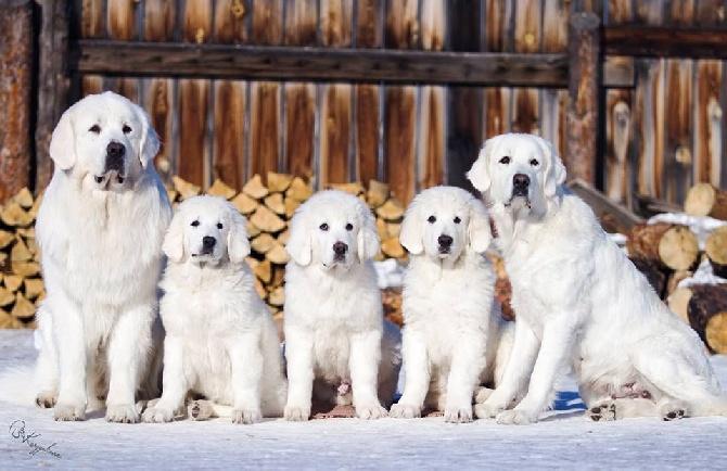 des Arcanes D'Hermes - En Russie: Joy Snow Bear Giant des Arcanes d'Hermes