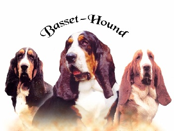Accueil - Elevage des brumes de smaug - eleveur de chiens