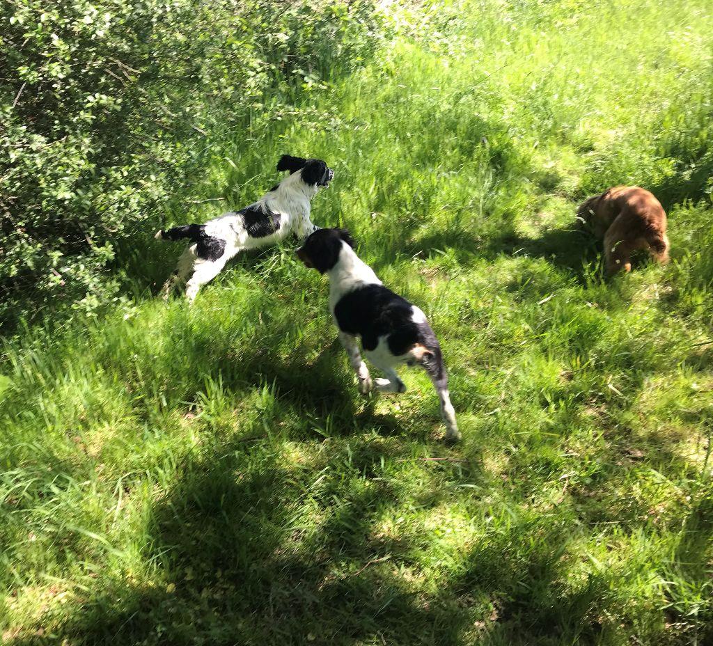 Off spring Du Terrier De Bonnin