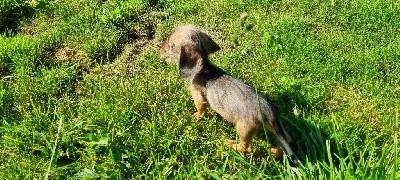 kaninchen fauve