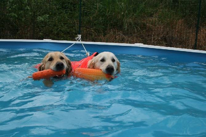 Accueil elevage du mazage de mascayenne eleveur de for Acheter piscine pour chien