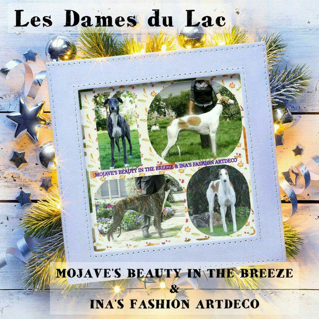 Des dames du lac - Greyhound - Portée née le 25/11/2018