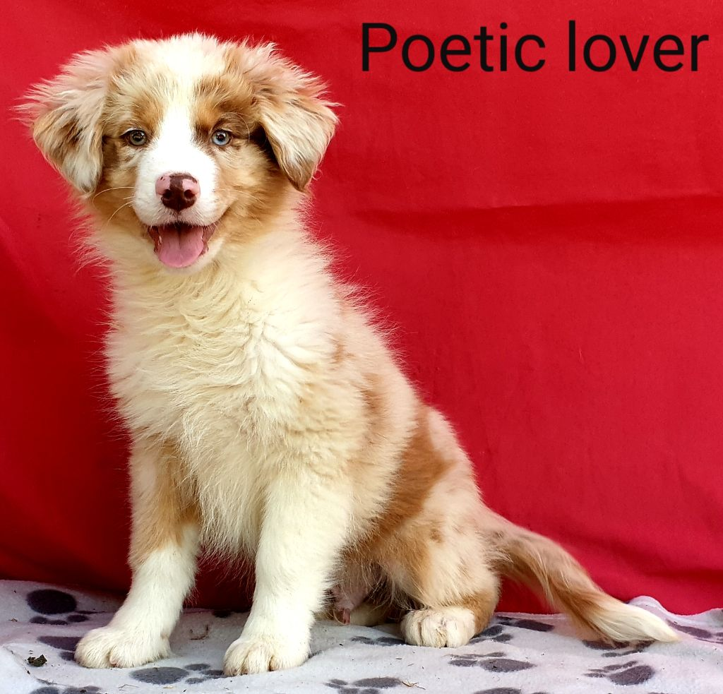 Poetic lover - Berger Australien