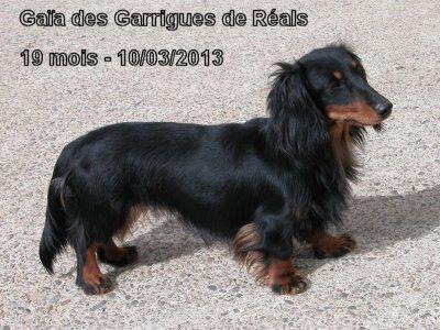 des Garrigues de Réals - Gaïa Championne 2014