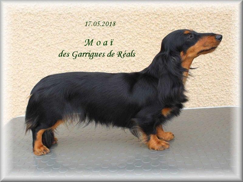 des Garrigues de Réals - Moaï Championne 2019