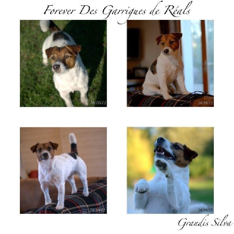 CH. Forever des Garrigues de Réals