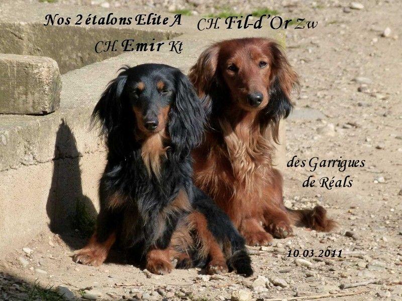 CH. Fil-d'or des Garrigues de Réals