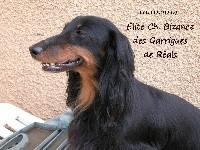 CH. Bizance des Garrigues de Réals