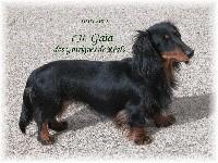 CH. Gaia des Garrigues de Réals