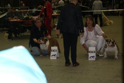 d'Ellendil - CACS pour Jake à Chartres