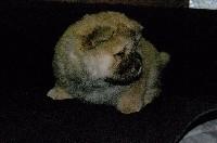 femelle fauve (collier bleu)