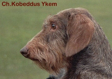 Publication : Kobeddus  Auteur : Caroline Geerts