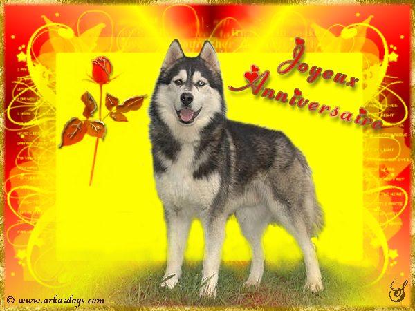 carte anniversaire chien loup
