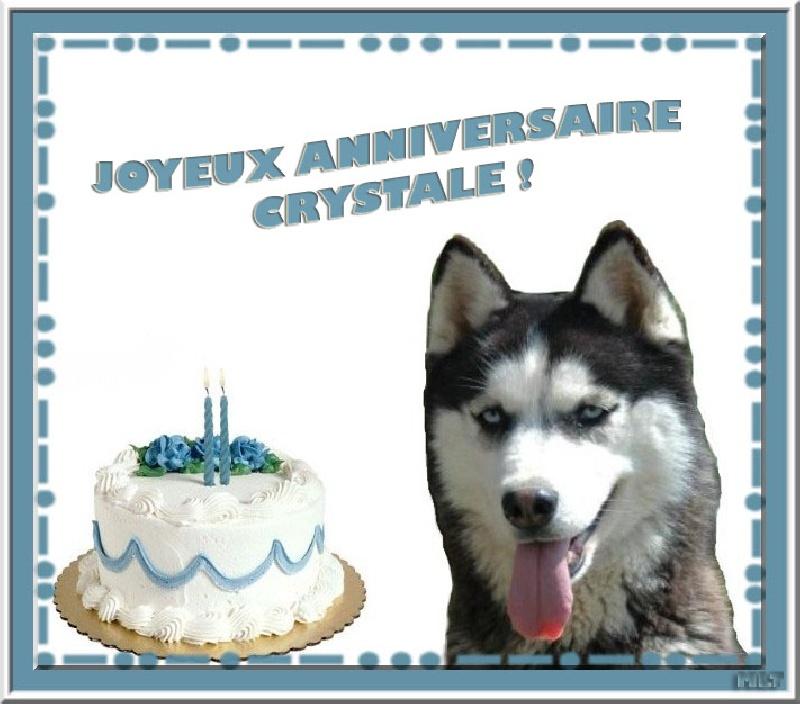 anniversaire chien loup