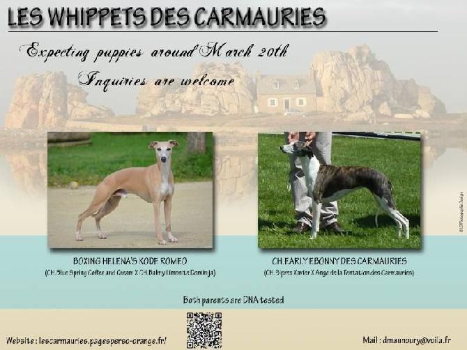des Carmauries - Une nouvelle portée attendue vers le 20 mars