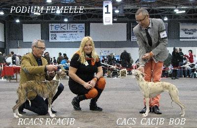 des Carmauries - Exposition Internationale de Troyes