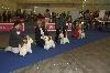 - Quelques photos de l'European Dog Show