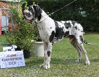 j.ch il est la Di Vendra Nera - nationale d' élevage