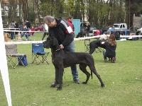 Vice champion de france 2014 gamin des saphirs d'atlantis - regionale d'élevage