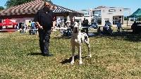 Emira Du Jardin D'Unak - regionale d'élevage anthy-sur-leman