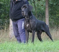 Vice champion de france 2014 gamin des saphirs d'atlantis - speciale dogue allemand