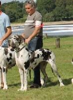 Hommage d'esperanca des saphirs d'atlantis - nationale d' élevage