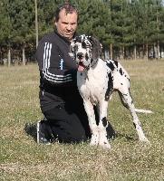j.ch il est la Di Vendra Nera - speciale dogue allemand