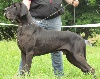 Vice champion de france 2014 gamin des saphirs d'atlantis - excellent
