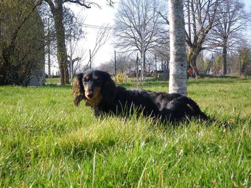 Photo elevage du domaine de luard eleveur de chiens - A poil dans son jardin ...