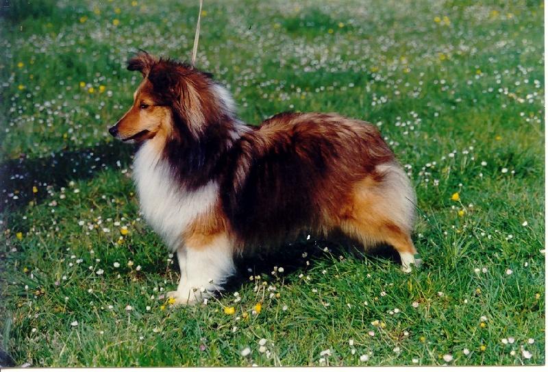 Noochka blonde du val guillon chien de race toutes races for Lacroix jardins 78