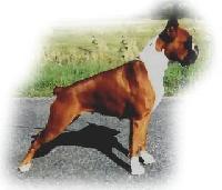 Chien elevage du rocher d 39 antheor eleveur de chiens boxer for Boxer jardin de passiflore