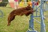 - Concours d'agility