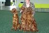 - expo canine de Saarbrucken