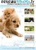- Produits et accessoires pour chiens et chats