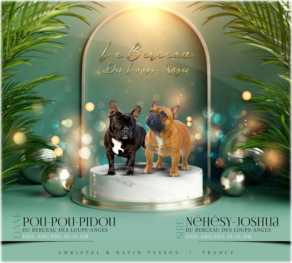 le berceau des loups-anges - Mariage Pou-Pou & Néhésy