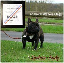 Joshua-andy du berceau des loups-anges le berceau des loups-anges