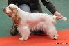 - Exposition Canine CACS - Flixecourt 03/03/2013