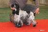- Expo canine CACS Flixecourt - 03/03/2013